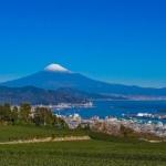 茶畑の向こうに見える富士山