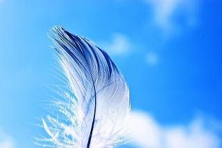 青空と鳥の羽